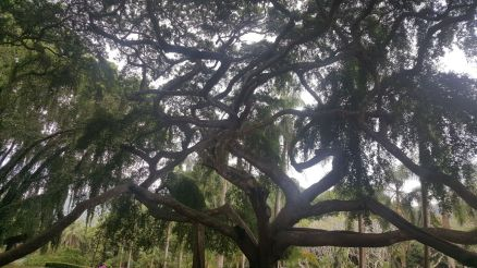 If a tree could tell a story!