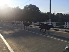 All sorts of traffic in Sri Lanka.