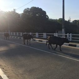 All sorts of traffic in Sri Lanka.