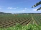 Fertile rice paddies.