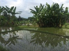 Palm tree reflections.