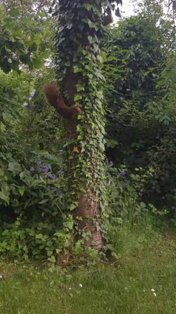Spotting red squirrels running around the garden!