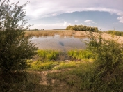 Part of the lake on our evening walk around the nature reserve.